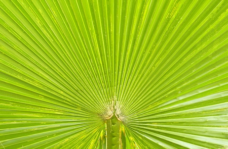 Green palm Leaf texture and background photo
