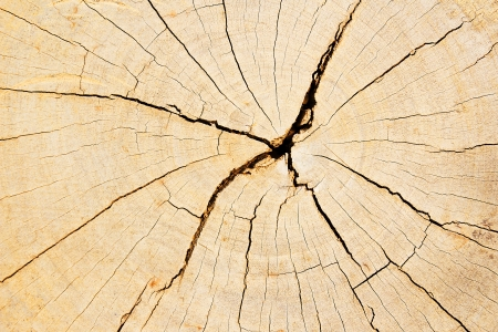 texture of tree stump background photo