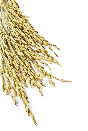 Close up wheat isolated on white background photo