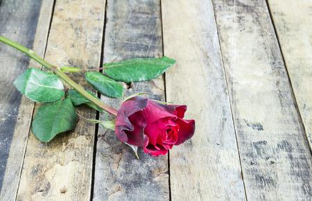 Fresh red rose on wooden background. Valentine
