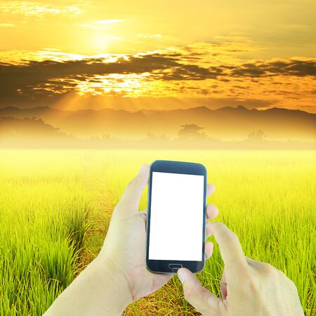 Hand holding smart phone on green paddy rice in field and sky sunset background Stock fotó
