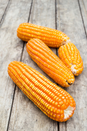 transgenic: Dried corn on an old wooden background
