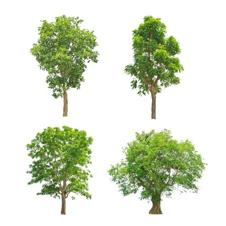 Green trees collection isolated on white background