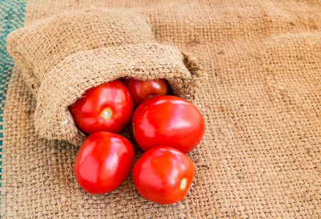 grunged: Close up Fresh red tomato on grunged agriculture sack background