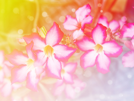 l natural: Beautiful fresh flowers with soft focus color filtered background