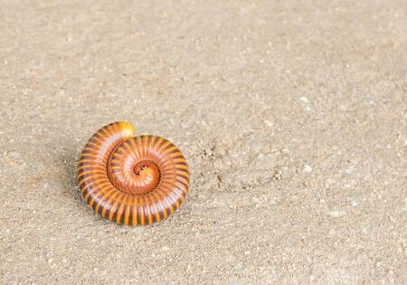Close up millipede on the cement floor Stock Photo