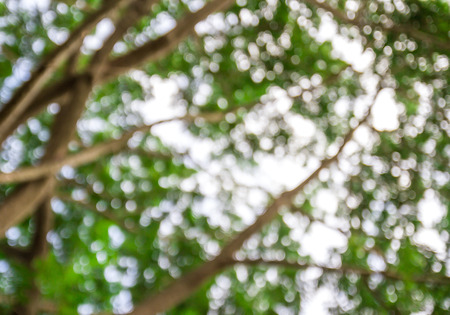 green nature: Sunny abstract green nature background, selective focus Stock Photo