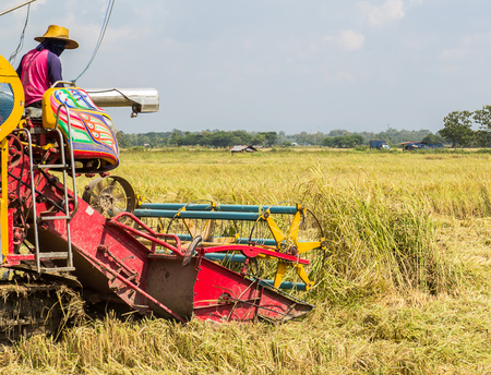 agricultural activities with combine harvesting machine in wheat crops