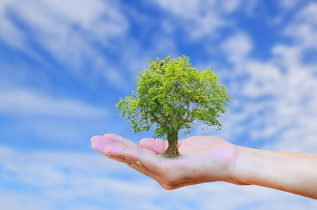 手握树与burred蓝天背景。生态学的概念。世界环境,地球日,器官捐赠,创造,圣经概念