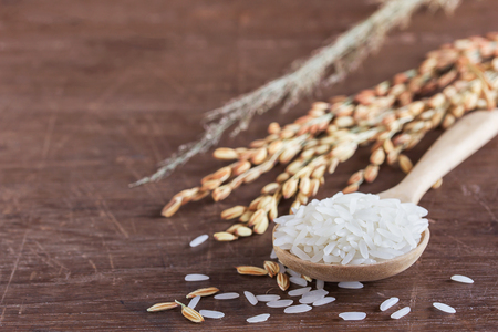 Close up wheat or paddy rice on wooden table with copy space