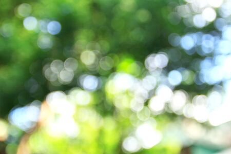Green bokeh abstract background and texture for design and blackground for use.