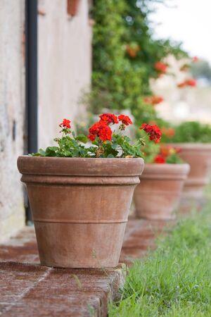 Row of geranium pots outside a Tuscan farmhouse photo