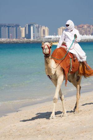 Camello en Jumeirah Beach en Dubai, Emiratos Árabes Unidos  Foto de archivo