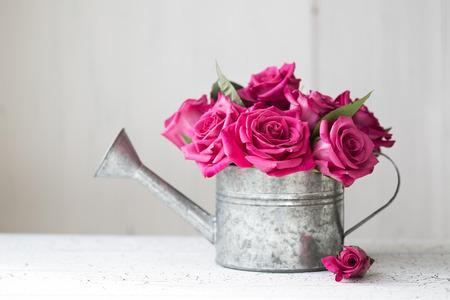 ビンテージの水まき缶でピンクのバラ