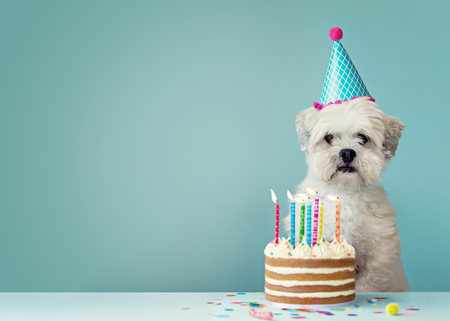 Cute dog with party hat and birthday cake Archivio Fotografico