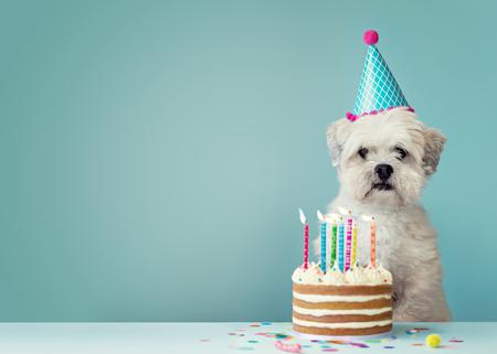 Leuke hond met feestmuts en verjaardagstaart Stockfoto