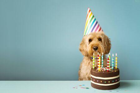 Cane carino con cappello da festa e torta di compleanno Archivio Fotografico
