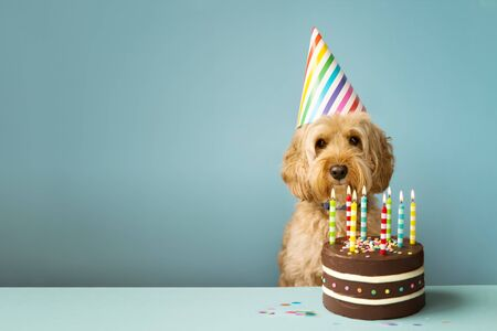 Cute dog with party hat and birthday cake Фото со стока