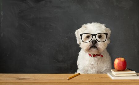 Small white dog sitting at a school desk
