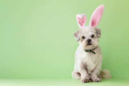 Small white dog dressed up for Easter