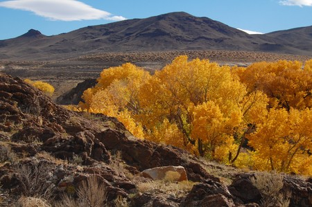 foothills: golden cottonwoods and foothills of nevada in the fall Stock Photo