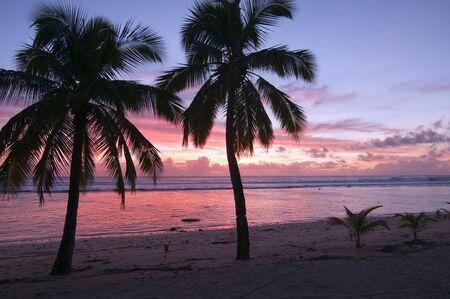Palm Trees at Sunset - Rarotonga, Cook Islands photo