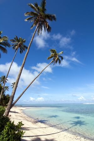 Palm Trees reflected on the Ocean, Rarotonga, Cook Islands Stock Photo