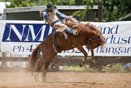 bucking horse: Rodeo, Bucking Bronco Editorial