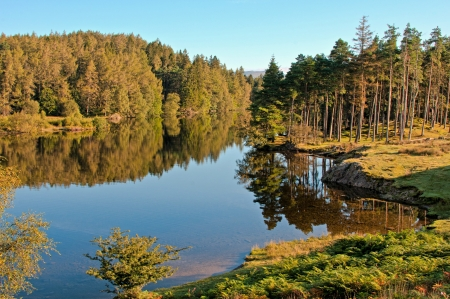 Early morning at Tarn Hows in the Lake District National Park, England