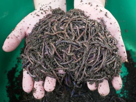 earthworm to produce fertile soil and organic farming Stock Photo