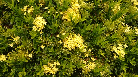 Plants with yellow flowers