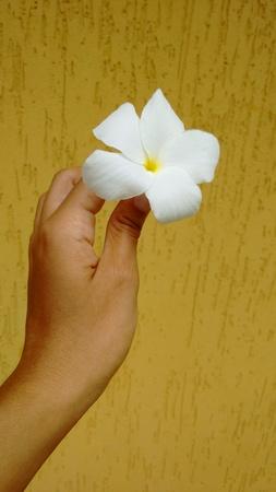 White flower in hand