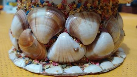 Box-shaped sea shells Reklamní fotografie