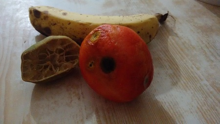 Tomato, banana and lemon in senescence, deteriorated Reklamní fotografie