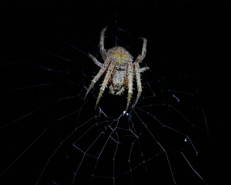 arachnid: A scary mean and nasty looking Spider (arachnid) in his web at night time