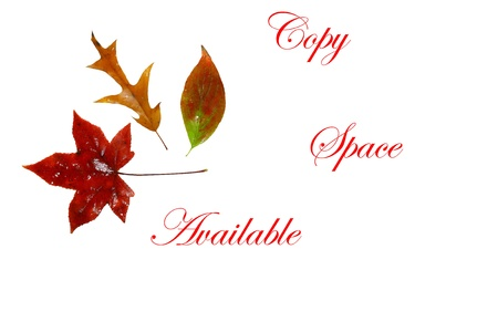 Colorful Isolated on white Fall leaves framing a message area for your copy space and text
