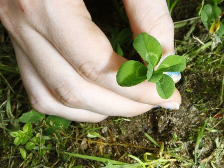 trifolium: A young girls hand picking a four leaf clover she found out of a cluster of clover with room for your text