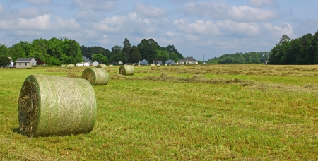 A farmers field behind some houses filled with large round bales of straw to be used in many different ways by whoever purchases them with room for your text, photo