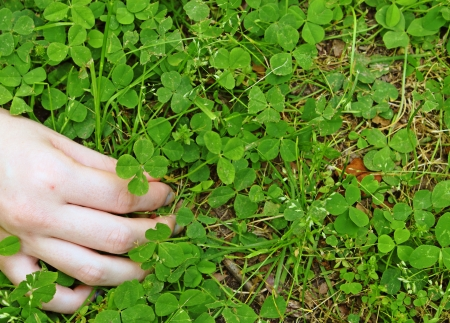four p: A young girls hand picking a four leaf clover she found out of a cluster of clover with room for your text.