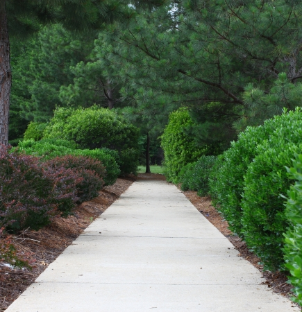 A sidewalk through a well maintained manicured and landscaped row of hedges and bushes leading into the woods