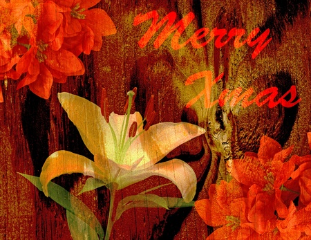 An Antique Vintage high contrast textured lily and poinsettias for your Christmas use photo