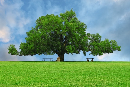room for your text: A large oak tree in a grass field in a park used as a shade tree for picnic tables on a gorgeous summer day with room for your text.