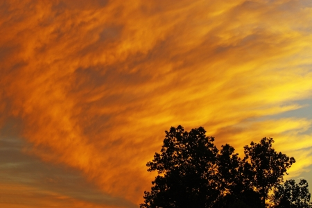A silhouetted tree top against a beautiful bright fall sunset in the clouds at early evening Stock Photo