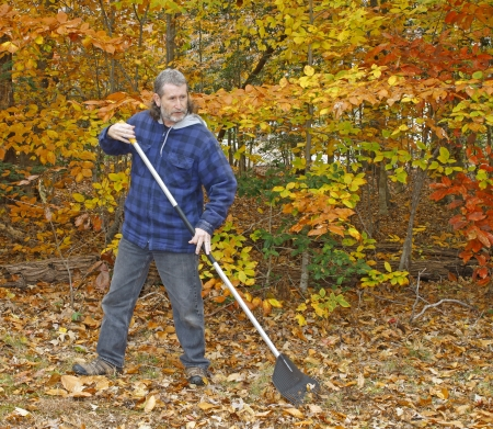 groundskeeper: A mature long gray haired man with a beard raking leaves outside on a fall day in the yard