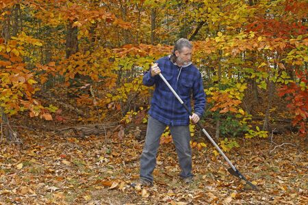 A mature long gray haired man with a beard raking leaves outside on a fall day in the yard photo