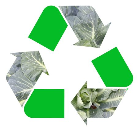 international recycle symbol: Fresh collard greens as the international Recycle Symbol, illustration Isolated On White Background Stock Photo