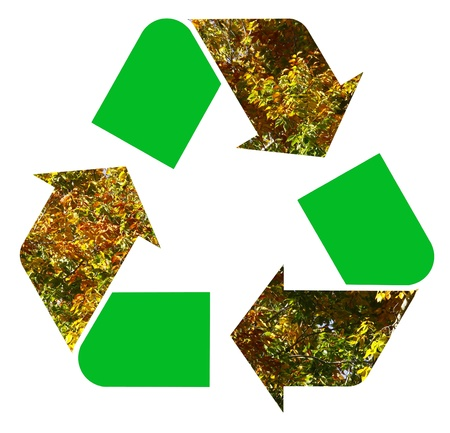 international recycle symbol: A fall foliage colored Beech trees leaves used as the international Recycle Symbol, illustration Isolated On White Background