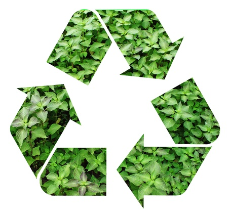 Fresh green mint representing the international Recycle Symbol, illustration Isolated On White Background Stock Illustration - 16553303