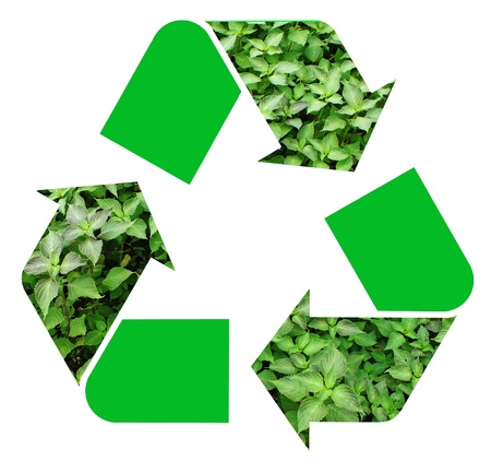 Fresh green mint representing the international Recycle Symbol, illustration Isolated On White Background Stock Illustration - 16553295