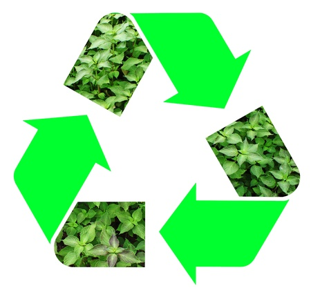 viewfinderchallenge3: Fresh green mint representing the international Recycle Symbol, illustration Isolated On White Background